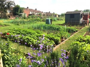 The Canalside allotments